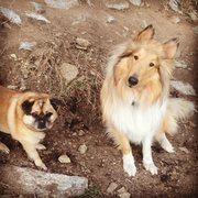 Rock Climbing Photo: The official crag dogs.  Otis and Barlow.