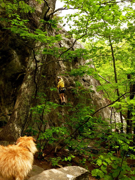 Rock Climbing Photo: Pup at the crag