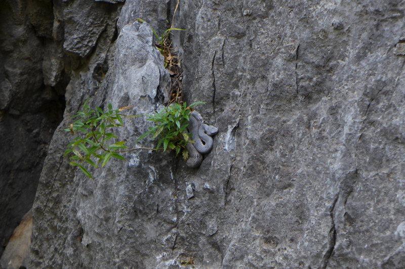 Rock Climbing Photo: Rattlesnake at the base of Thunderkiss, EPC