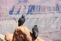 Rock Climbing Photo: condors