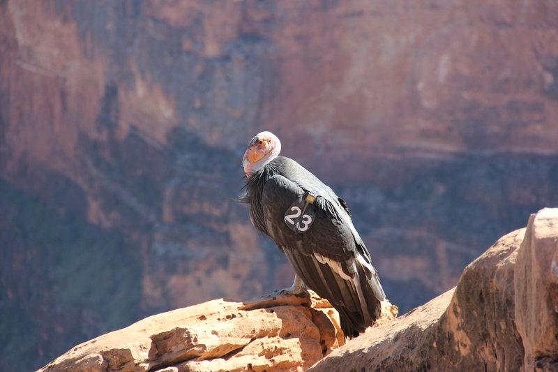Rock Climbing Photo: MJ condor
