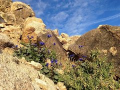Rock Climbing Photo: Early Spring in the High Desert, Apple Valley Area