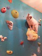 Cats climb too.