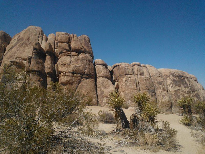 Rock Climbing Photo: Joshua tree!