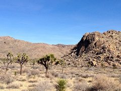 Rock Climbing Photo: The Black Rocks, Joshua Tree NP
