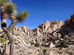 Rock Climbing Photo: Freeway Wall, Joshua Tree NP