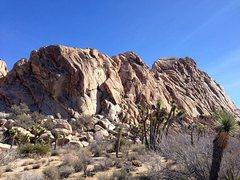 Rock Climbing Photo: Lost Horse Wall, Joshua Tree NP