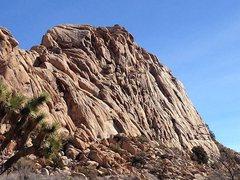 Rock Climbing Photo: Lost Horse Wall - Right Side, Joshua Tree NP
