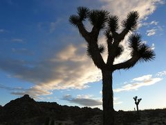Rock Climbing Photo: Joshua Tree sunrise, Joshua Tree NP