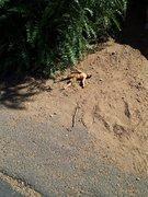 Rock Climbing Photo: Man down @ Mt Rubidoux.