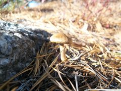 Rock Climbing Photo: mushroom atop peterskill