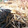 mushroom atop peterskill