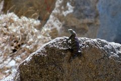 Rock Climbing Photo: Say hello to my little friend. Wildlife in quarry.