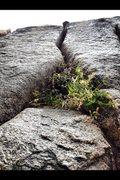 Rock Climbing Photo: Tahquitz Splitter!