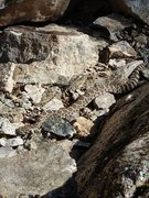 Rock Climbing Photo: Rattler sunning itself at the base of Rattle and H...