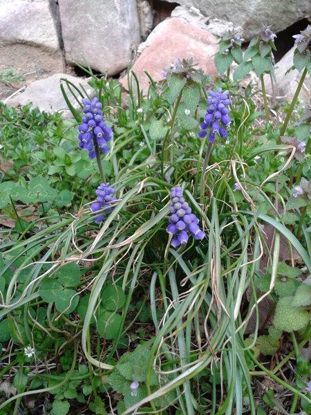 Rock Climbing Photo: Spring is springing.