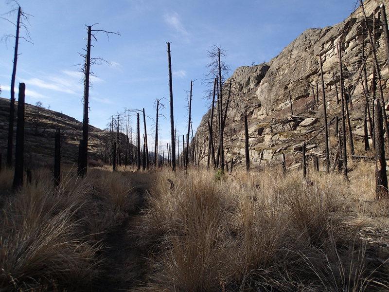Main Canyon from near the trailhead