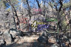 Hidden to left(looking)of elk trail