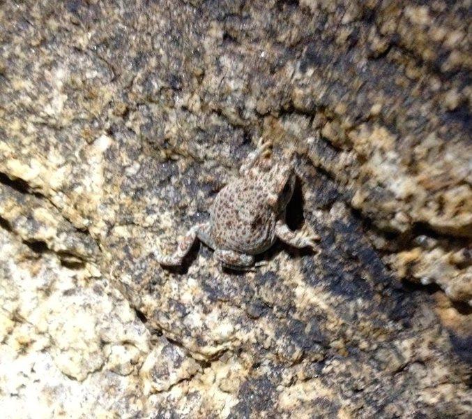 California Tree Frog sending near the Solarium