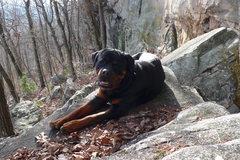 Rock Climbing Photo: Alabama yard dog.
