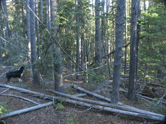 Rock Climbing Photo: General forest thickness while hiking the Elkhorn ...