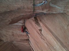 Rock Climbing Photo: Bird poop digest. Committed to cleaning.