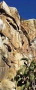 Rock Climbing Photo: The Dihedral Wall!