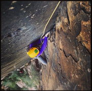 Rock Climbing Photo: Honeycomb Chimney. Pitch 7, 5.9