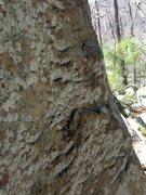 Rock Climbing Photo: texture.