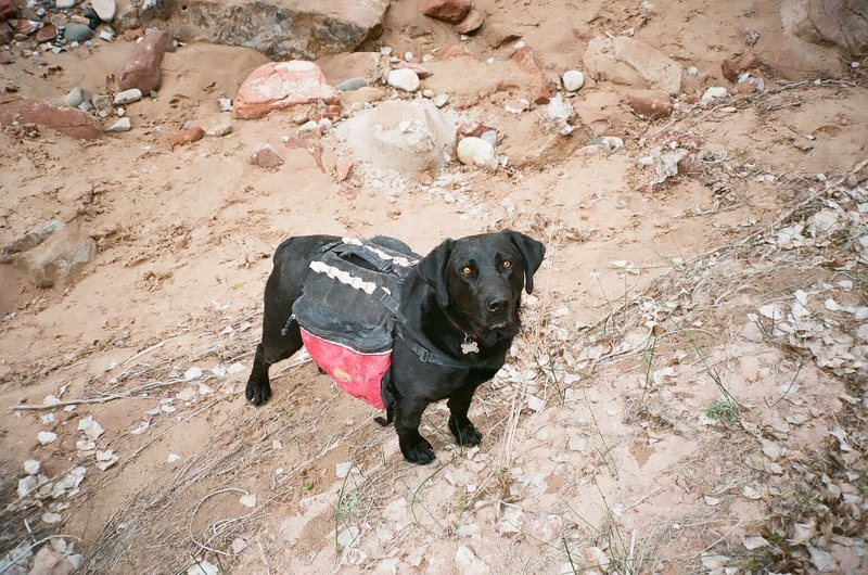 Rock Climbing Photo: Mans best friend carried the beer in and the empti...