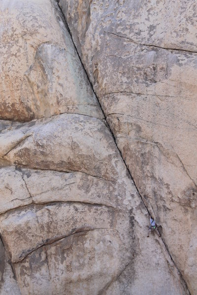 Rock Climbing Photo: Left Ski Track, Joshua Tree