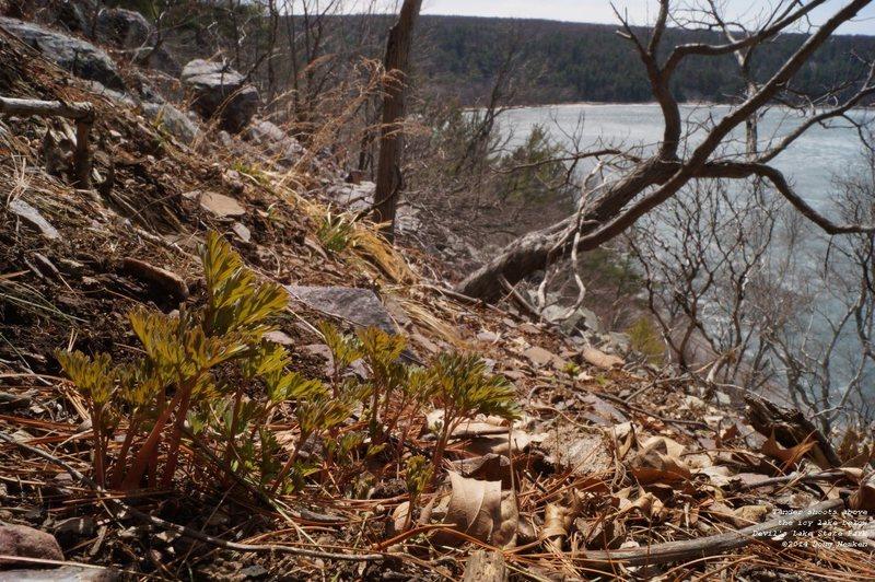Rock Climbing Photo: new shoots