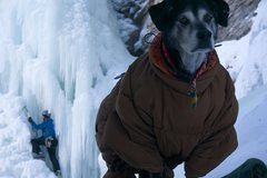 Rock Climbing Photo: A good crag dog