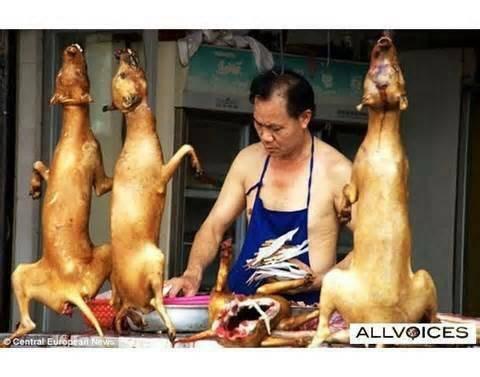 U wanna dog chow yuk?