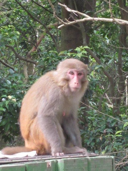 Rock Climbing Photo: No lions, but lots of monkeys.