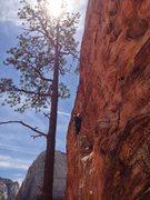 Rock Climbing Photo: tree pitch
