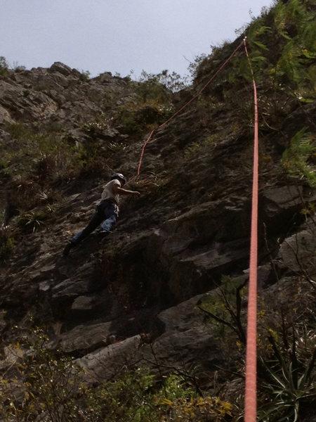 Cope climbing
