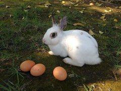 Rock Climbing Photo: Easter Bunny