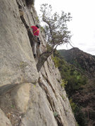 Rock Climbing Photo: Trevor Marks just passing the tree (on a much clea...