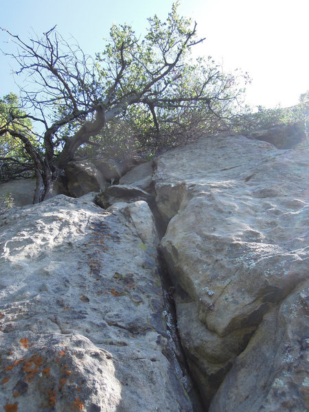 Rock Climbing Photo: The brilliant crack leading to the tree on the FA....