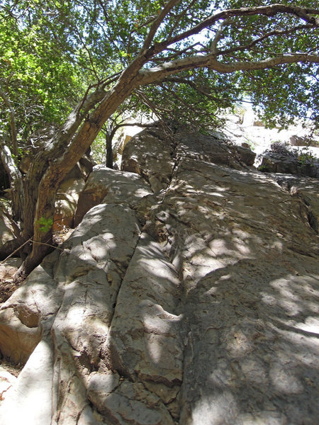 Rock Climbing Photo: The seam to follow. (Some of the branches have sin...
