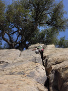 """Rock Climbing Photo: Ches Upham in the business on a cleaned up """"I..."""