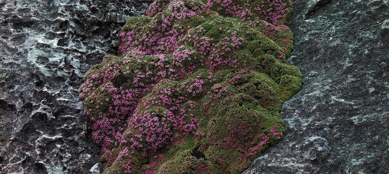 Rock Climbing Photo: Moss