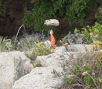 Rock Climbing Photo: Trevor Marks making things a bit safer for those y...