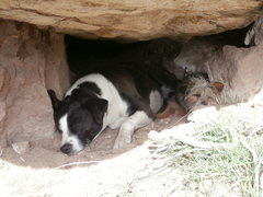 Rock Climbing Photo: The pups find reprieve from the sun.