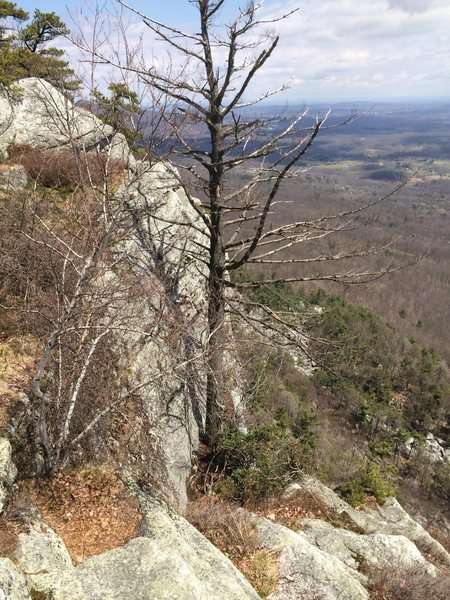 Rock Climbing Photo: The dead Westward Ha pine that used to be the rap ...