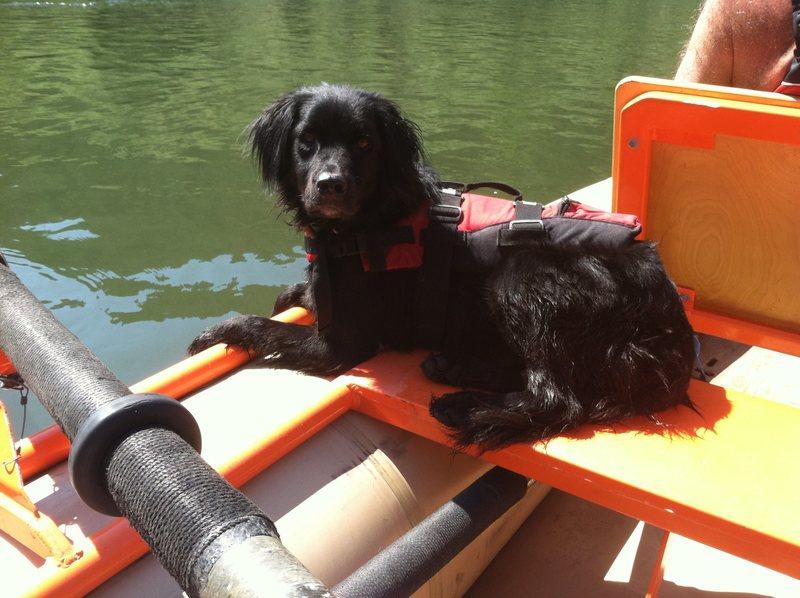 Rock Climbing Photo: My dog on the river