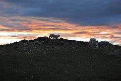 Rock Climbing Photo: Visitors at camp.