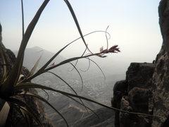 Rock Climbing Photo: Tillandsia are among the few plants that survive t...
