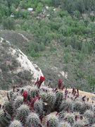 Rock Climbing Photo: Desert fauna